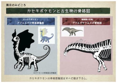 ポケモン化石博物館